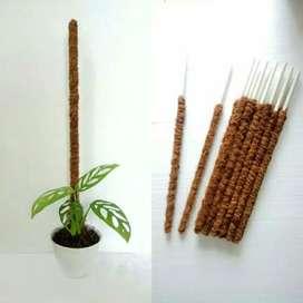stik turus tanaman