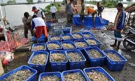 Dijual Murah Tambak Udang 70ha Masih Produktif Di Karawang Jawa Barat