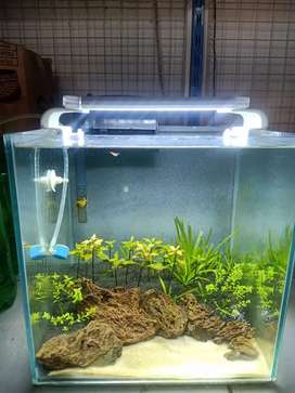 Aquascape fullset bosan 30 cm 5 ml sunblast