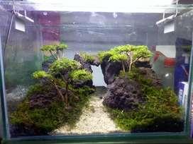 Mini Aquascape/aquarium