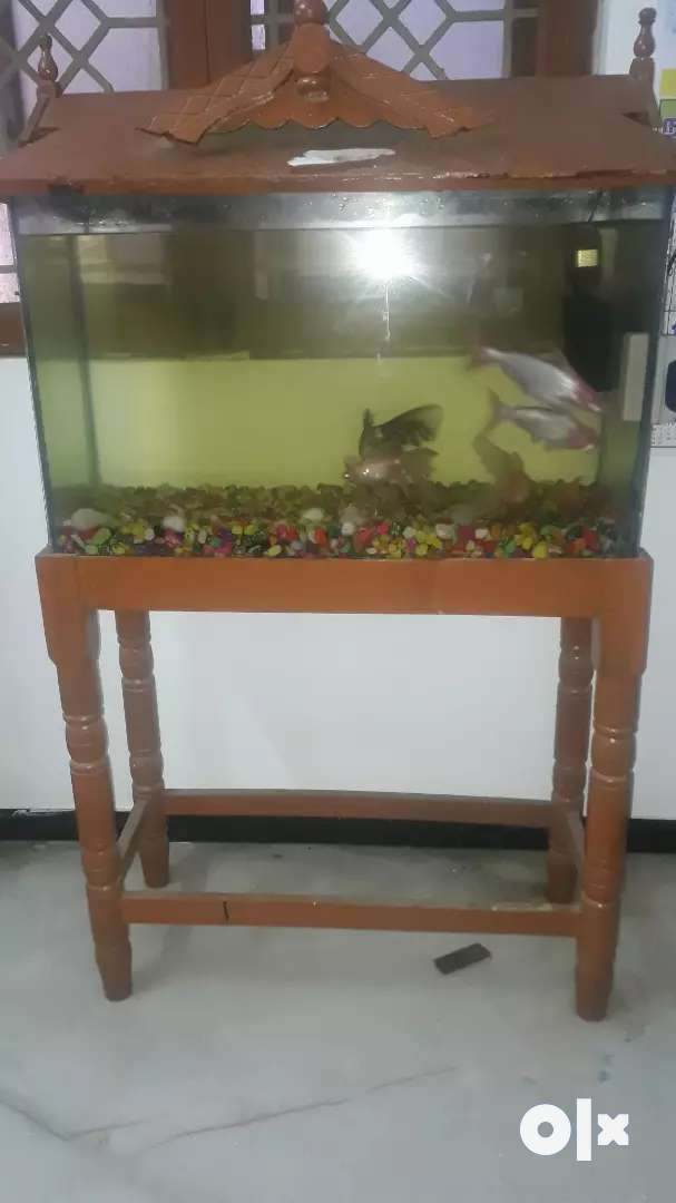 Fish tank with accessories 0