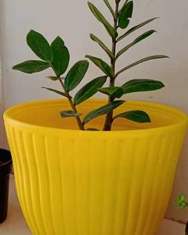 Flower pots for sale  from ₹10 - ₹180