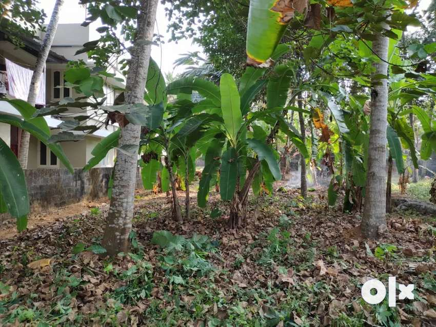 8 Cent Lorry accessible plot in highly residential area of Muttada. 0