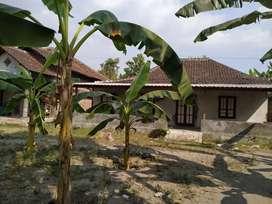 Kontrakan Rumah suasana desa