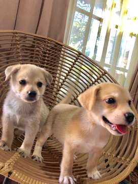 Anak anjing puppy lucu