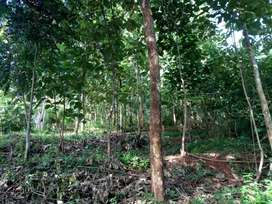 Property with 20 years old teak trees and rubber.