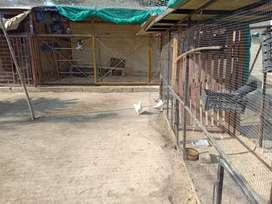 Mini zoo Big size cages including all birds
