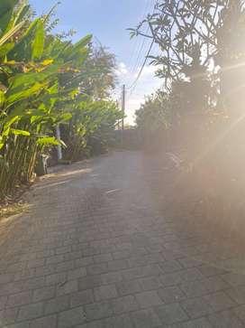 Dijual tanah wilayah strategis unt villa guesthouse dll berawa tandeg