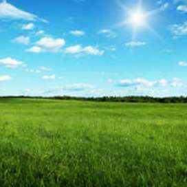 Land for sell in tura main town for 25 lakh only urgent.