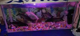 I want to sale my Aquarium with fishs oxgen and attentive light