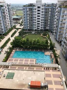 Flats available on rent in jalandhar heights in all varients.