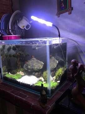 Aquarium Akuarium UK 40 x 25 x 28