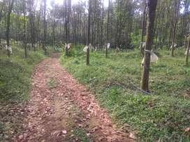 4Acre rubber thottam in mundakayam koovappally  ,suitable for farm,