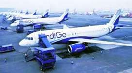 Urgent hiring for male or female in Indigo Airlines