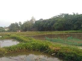Dijual Tanah Empang Kolam Ikan 7500 m2 Dekat Pasar Ciseeng - Bogor