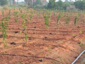 @Buy a farm plot near Ramoji Film City for better tomorrow@