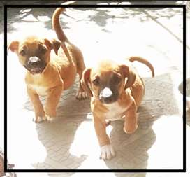 Puppies jenis kecil mix teckel