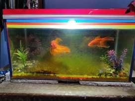 Fish aquarium with 2 golden fish