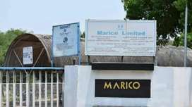 DIRECT JOINING IS GOING ON MARICO COMPANY