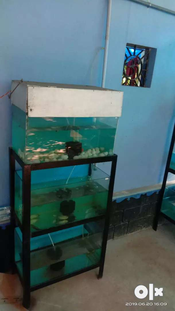 Aquarium with stand for sale 0