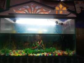 Aquarium with all materials