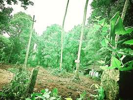 Housing Plot & Land-Rs 1,50,000/cent (negotiable) for sale in Palakkad