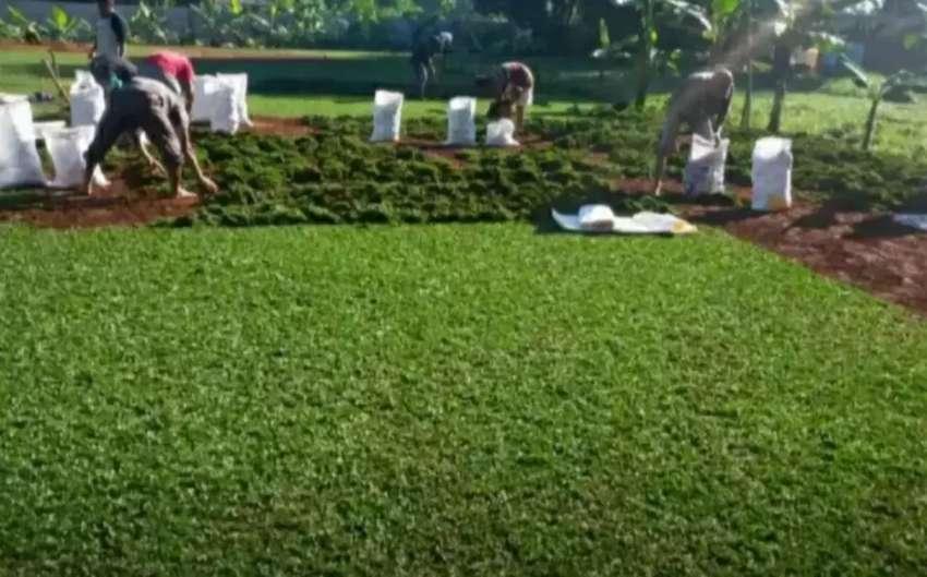 Tukang jual rumput gajah mini menerima embuatan Taman rumah Dll 0