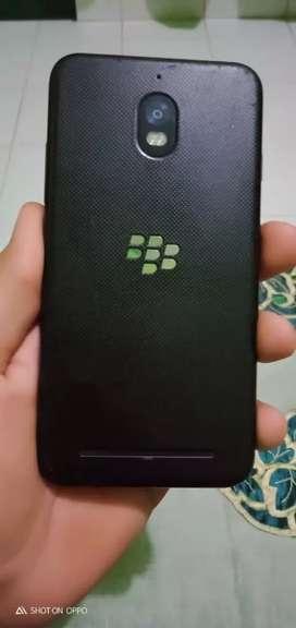 Blackberry aurora 4/32