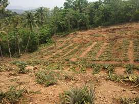 1 acre 64cent for sale at wadakanchery
