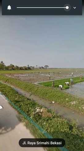 Tanah 40 hektar jual murah  di tambelang  bekasi