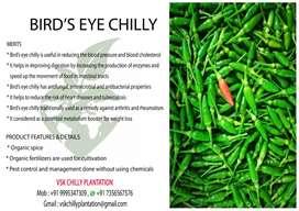 VSK chilli plantation(kanthari mulag