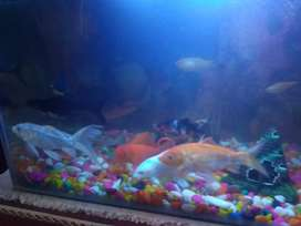 I want to sell my fishes