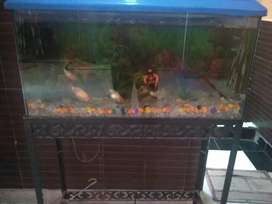 Fish aquarium with stand and filter