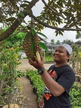 Bibit durian musangking dan bawor