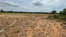 Land/coconut farm/agriculture land/agricultural land/farm land/house