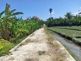 For Rent land 15 are near main road Jalan Raya Canggu