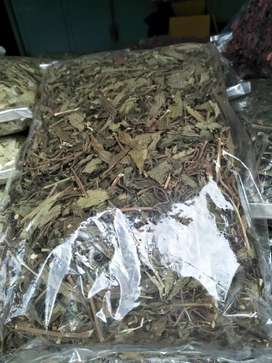 Teah herbal daun kumis kucing obat herbal alani