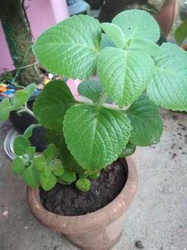 Plants for gardening