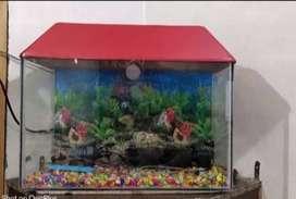 NEw fish aquarium