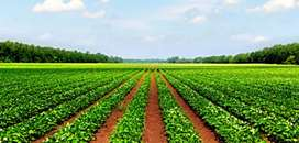 27 lakh per acre 56 acres agriculture land
