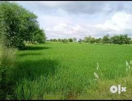 Agriculture land in tumsar area..