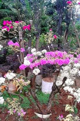 Jual pohon bunga kertas hias
