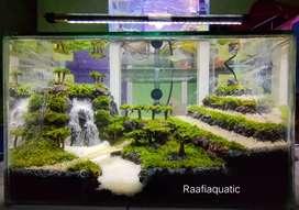 Aquascape terbaik versi Raafiaquatic