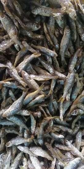 Ikan bilis aseli singkarak