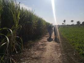 For buy or sell Agricultural land Contect with us
