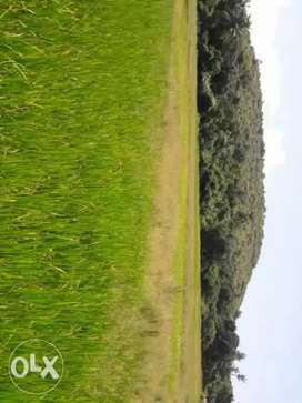 Field touch plot