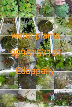 AQUARIUM  PLANTS at edappally