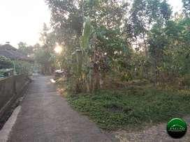 Sewa Tanah murah Sendangmulyo barat SMA N 1 Minggir (RI 32}