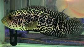 We only trade with Wholesaler, Shopkeeper and Aquarium Fish Trader