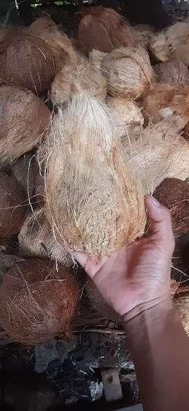 Jual kelapa santan asli sumbar